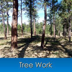 Tree Care and Tree Removal in Monument, Castle Rock, Front Range, Colorado