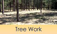 Tree work and tree removal in Monument, Castle Rock, Front Range, Colorado