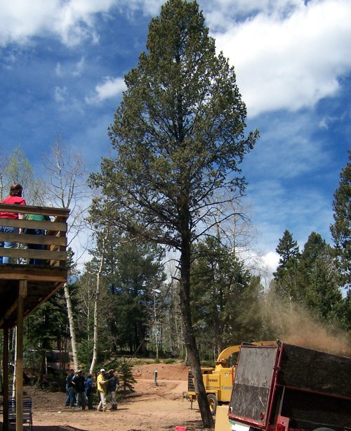 Tree Care & Tree Removal Services in Monument, Castle Rock, Front Range, Colorado Springs