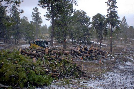Tree Care & Tree Removal in Monument, Castle Rock, Colorado Springs