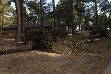 Tree removal for a new driveway in Black Forest, Colorado